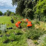 Réaménagement et plantation des massifs  de la ville d'istres pour le concours ville fleurie