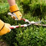 Entretenir son jardin en fonction des saisons
